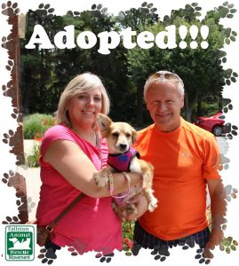 adopt_1
