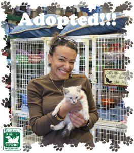 Adopt an animal today at Fallston Animal Rescue Movement