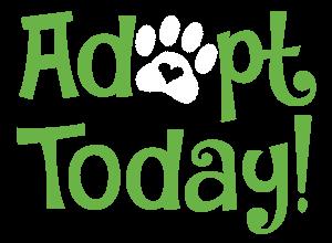 Adopt Today!